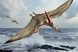 Pteranodon ingens
