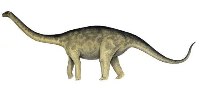 Rhoetosaurus, Foto: dinosaurs.about.com