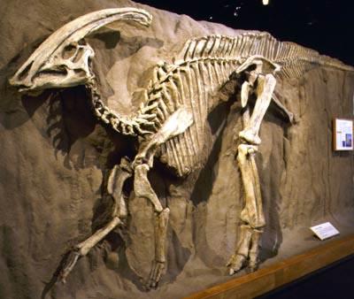Schelet de Parasaurolophus, Foto: rareresource.com