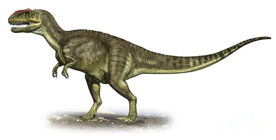 Yangchuanosaurus, Foto: pixshark.com
