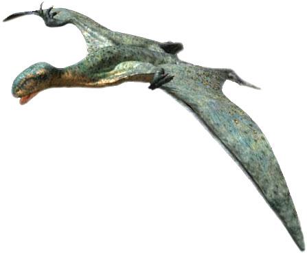 Anurognathus, Foto: decomputermeester.nl