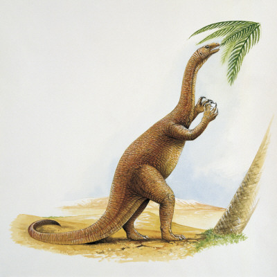 Dinozaurul Coloradisaurus, Foto: eljovepaleontoleg.blogspot.ro