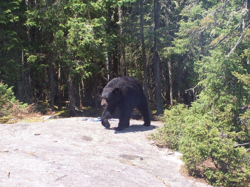 Braconaj de ursi, Foto: successimg.com