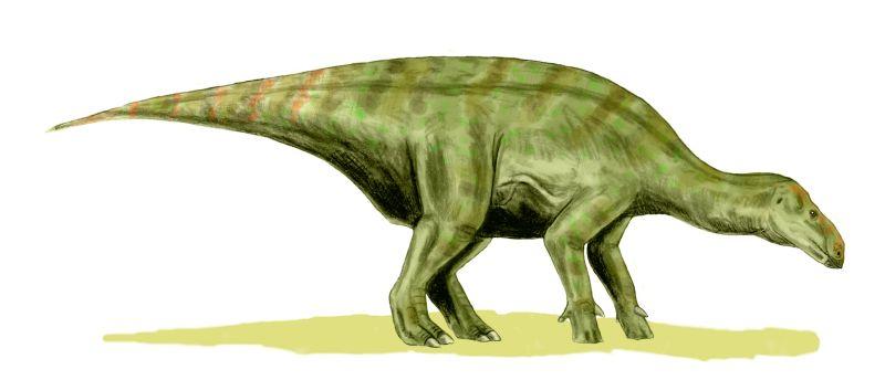 Iguanodon, Foto: palaeo.gly.bris.ac.uk
