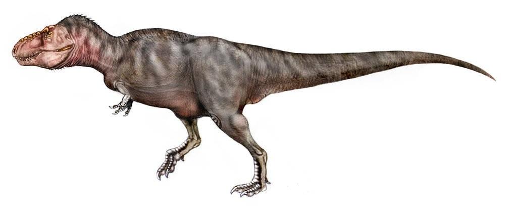 Lagosuchus talampayensis, Foto: taringa.net