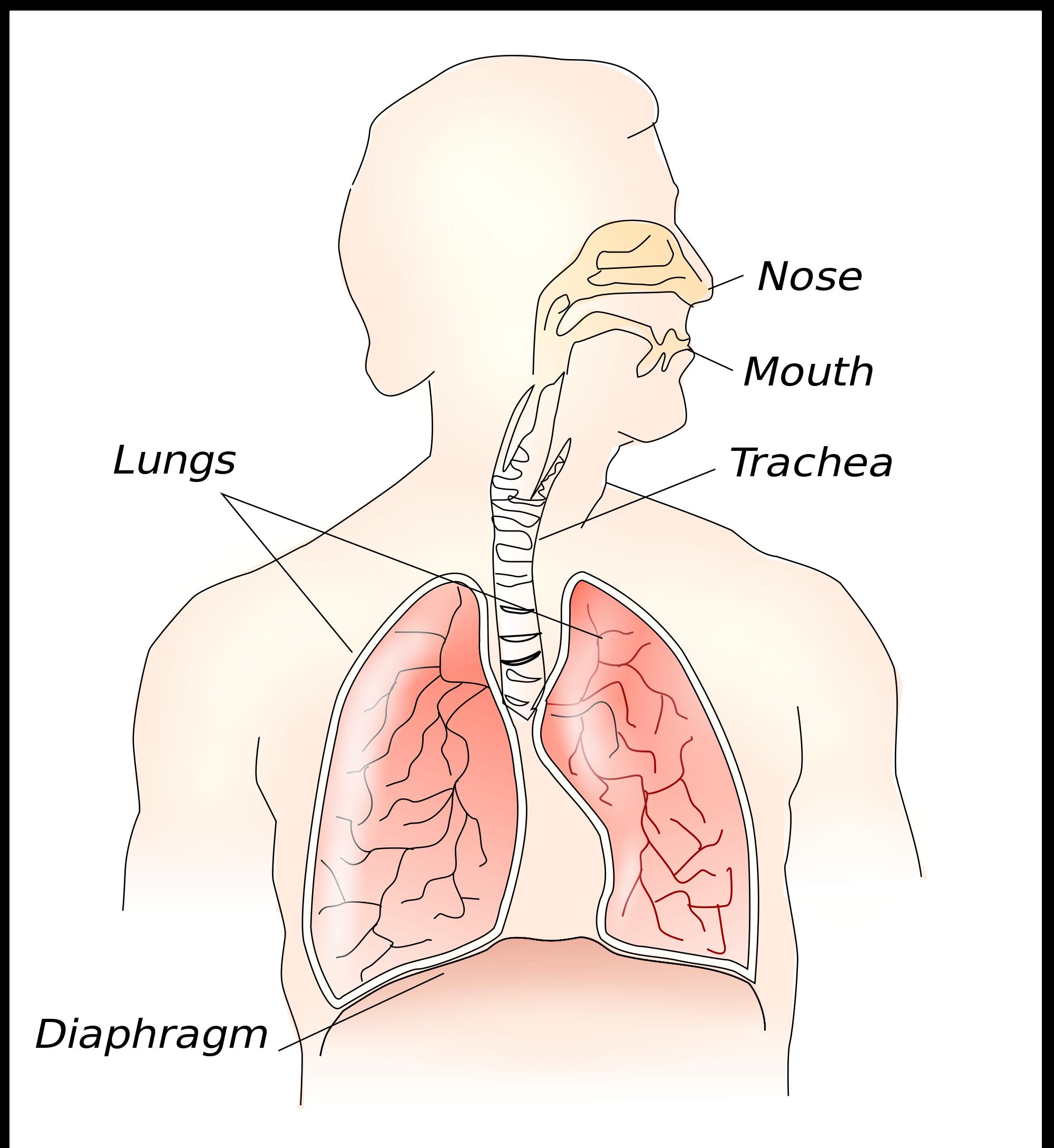 Afectiuni anatomice ale diafragmei