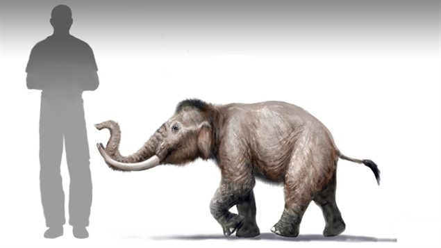 Mammuthus creticus, Foto: goodnewsanimal.ru