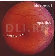 Structura globului ocular