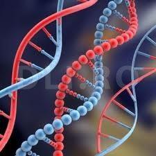 ADN-ul (structura dublu helix)