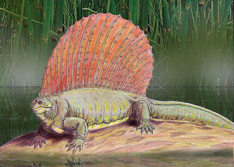 Edaphosaurus, Foto: dinossaurosvivos.blogspot.com
