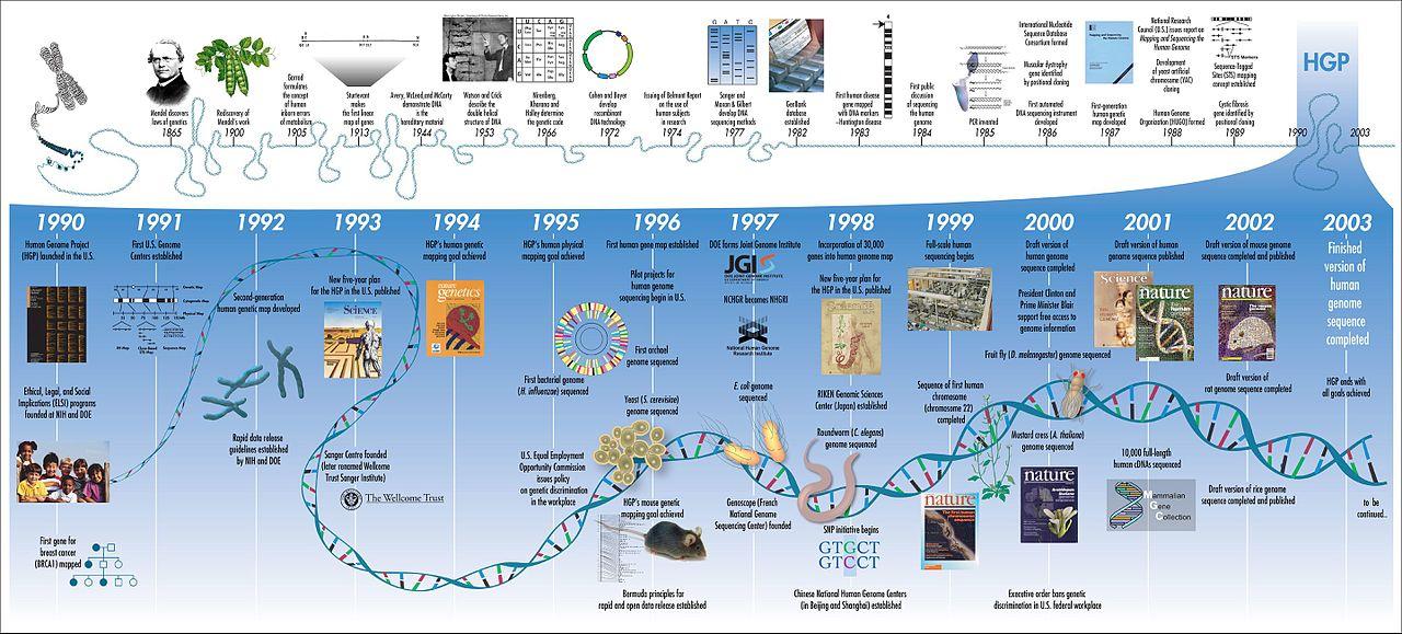 Human Genome evolutie
