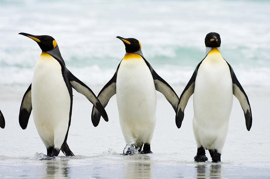 Penguini, Foto: cuantoviven.com