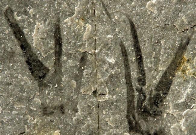 Kuteninchela Deep, Creatura preistorica