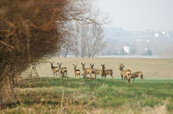 Grup de capriori, Foto: carpatys.com