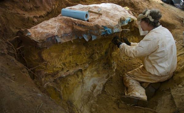 Descoperirea de la Cluj, Creasta de pterozaur, Foto: monitorulcj.ro