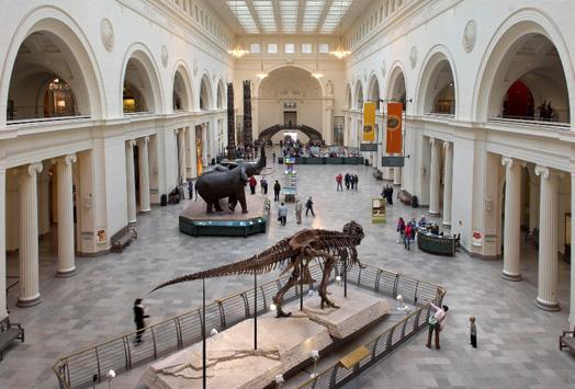 Muzeul de Istorie Naturala din Chicago, Foto: news.medill.northwestern.edu
