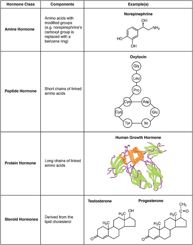 Hormoni1