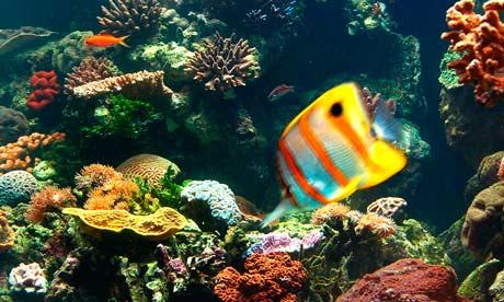 Imagine din Marea Bariera de Corali, Foto: guardian.co.uk