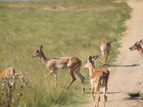 Foto: lulus-leben.blogspot.com
