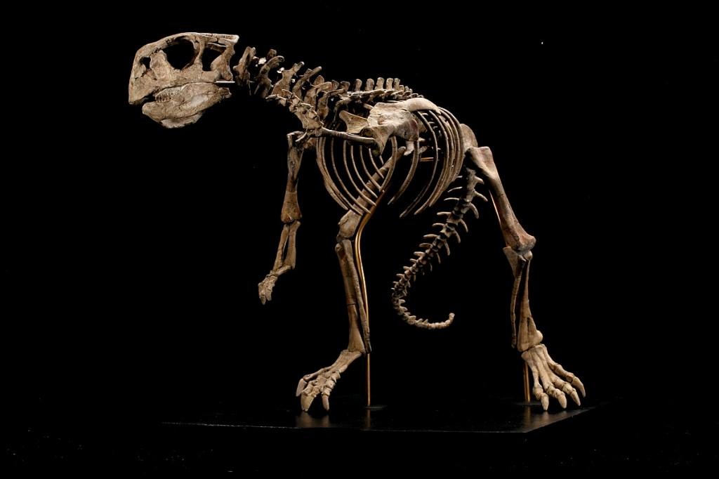 Schelet de dinozaur, Foto: armynews.gr