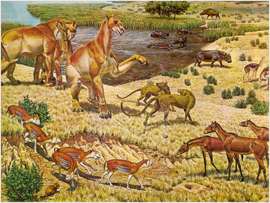 Animale preistorice de acum 10 milioane de ani, Foto: orange.ro
