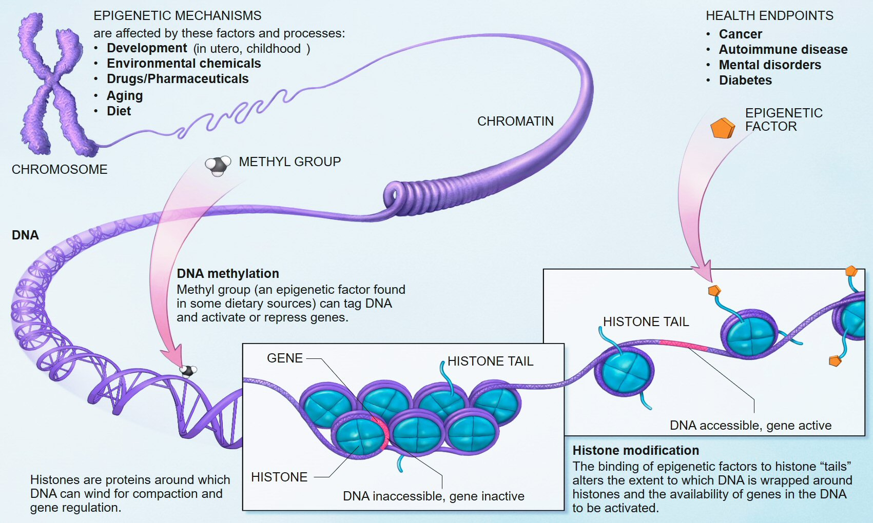 epigenetics1