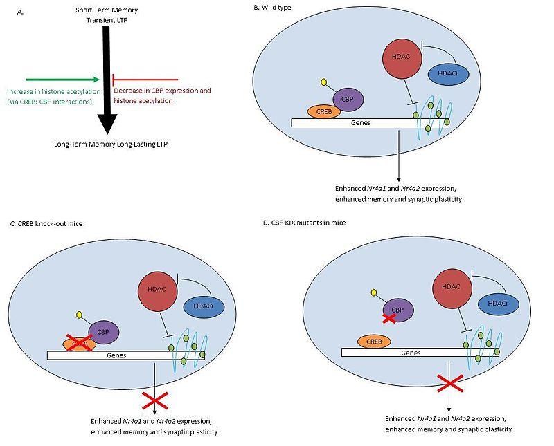 epigenetics111
