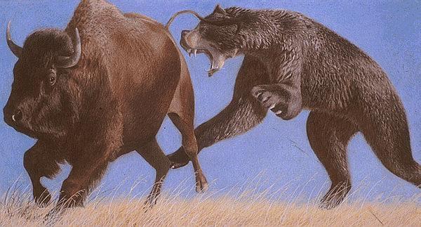 Ursul de pestera atacand un bizon