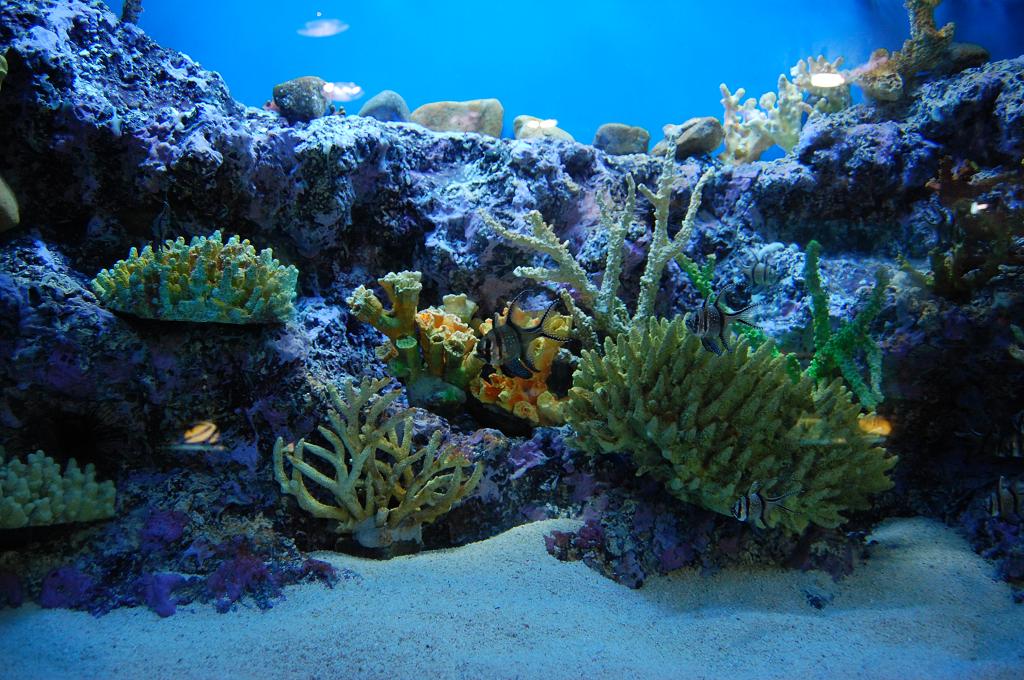aquarium b