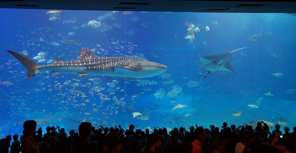 aquarium chiruami