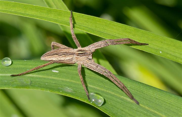 păianjeni prădători și paraziți oxiuros sintomas en hombres