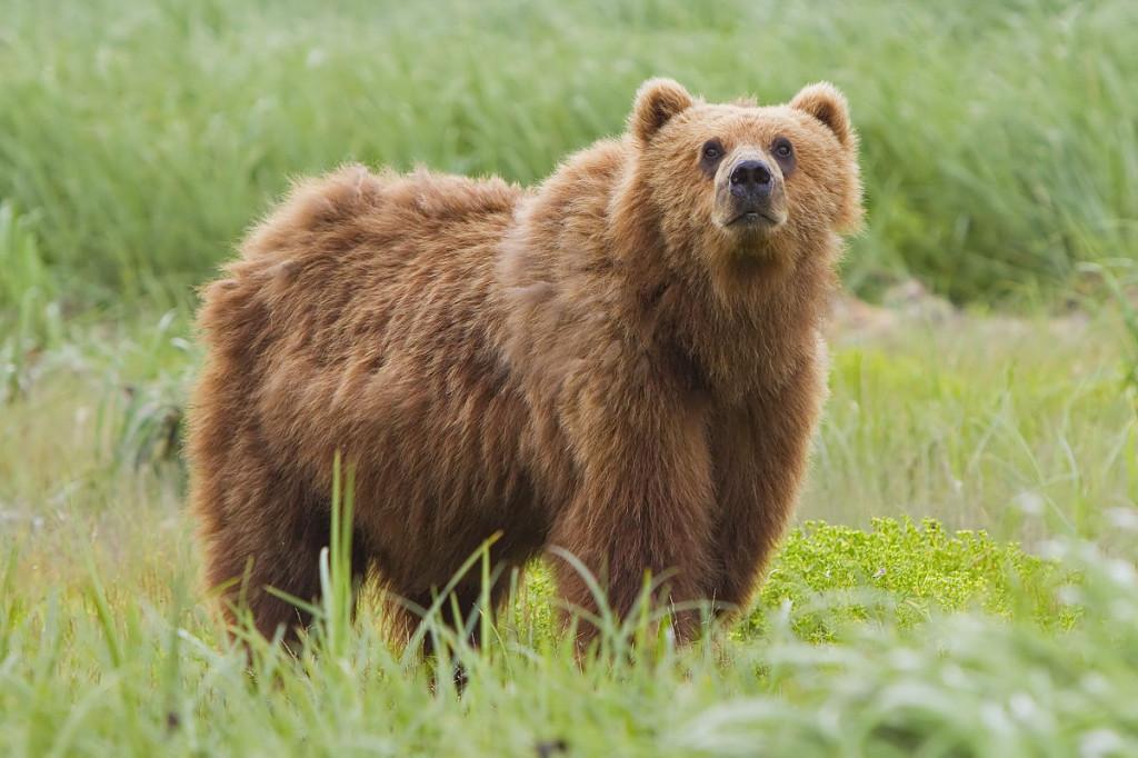 pierdere în greutate urs