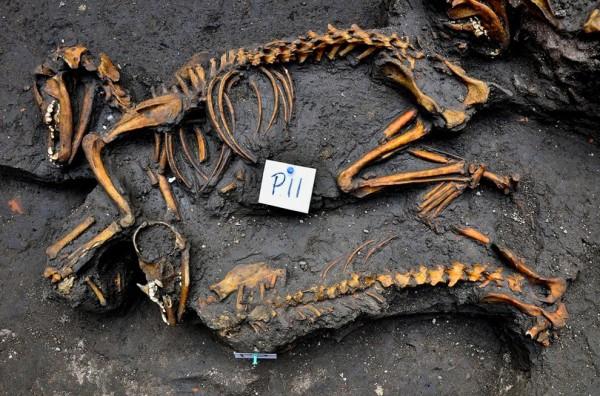 Morminte câini
