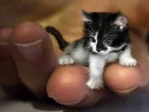 Peenles - Cea mai mica pisica din lume