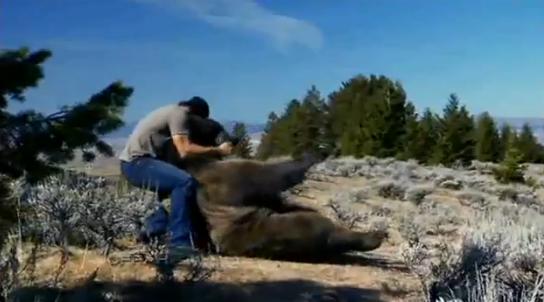 Cassey Andderson se joaca cu ursul Brutus