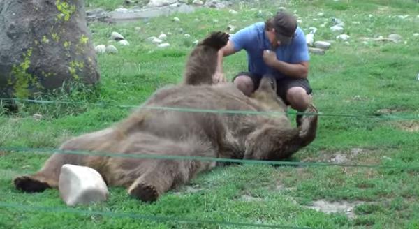 Ursul Brutus se joaca tolanit in iarba cu prietenul sau