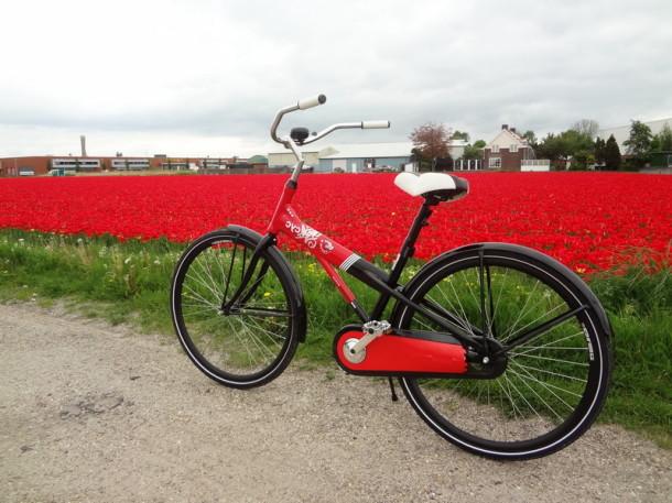 biciclete Amsterdam (13)