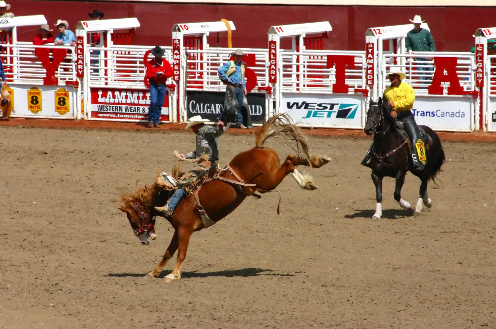 cowboy-on-bucking-bronco-in-calgary-stampede-alberta-canada-1600x1062