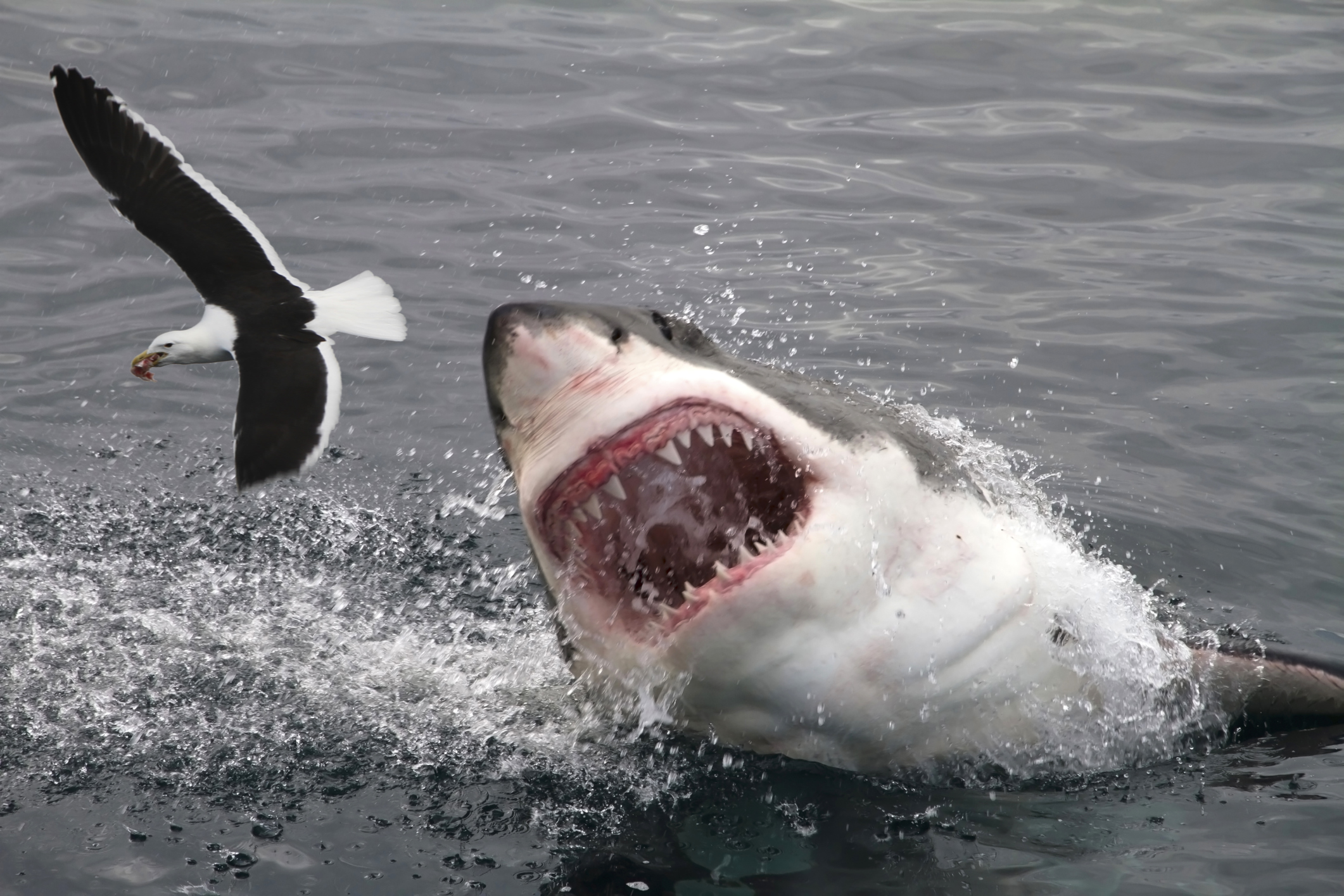 most-dangerous-places-shark-attack-orig