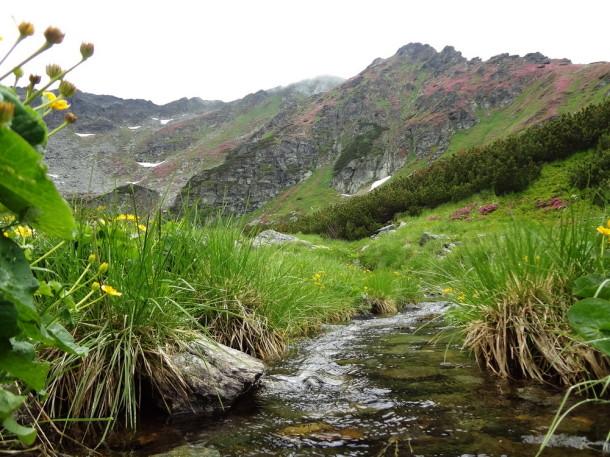 muntii rodnei (8)