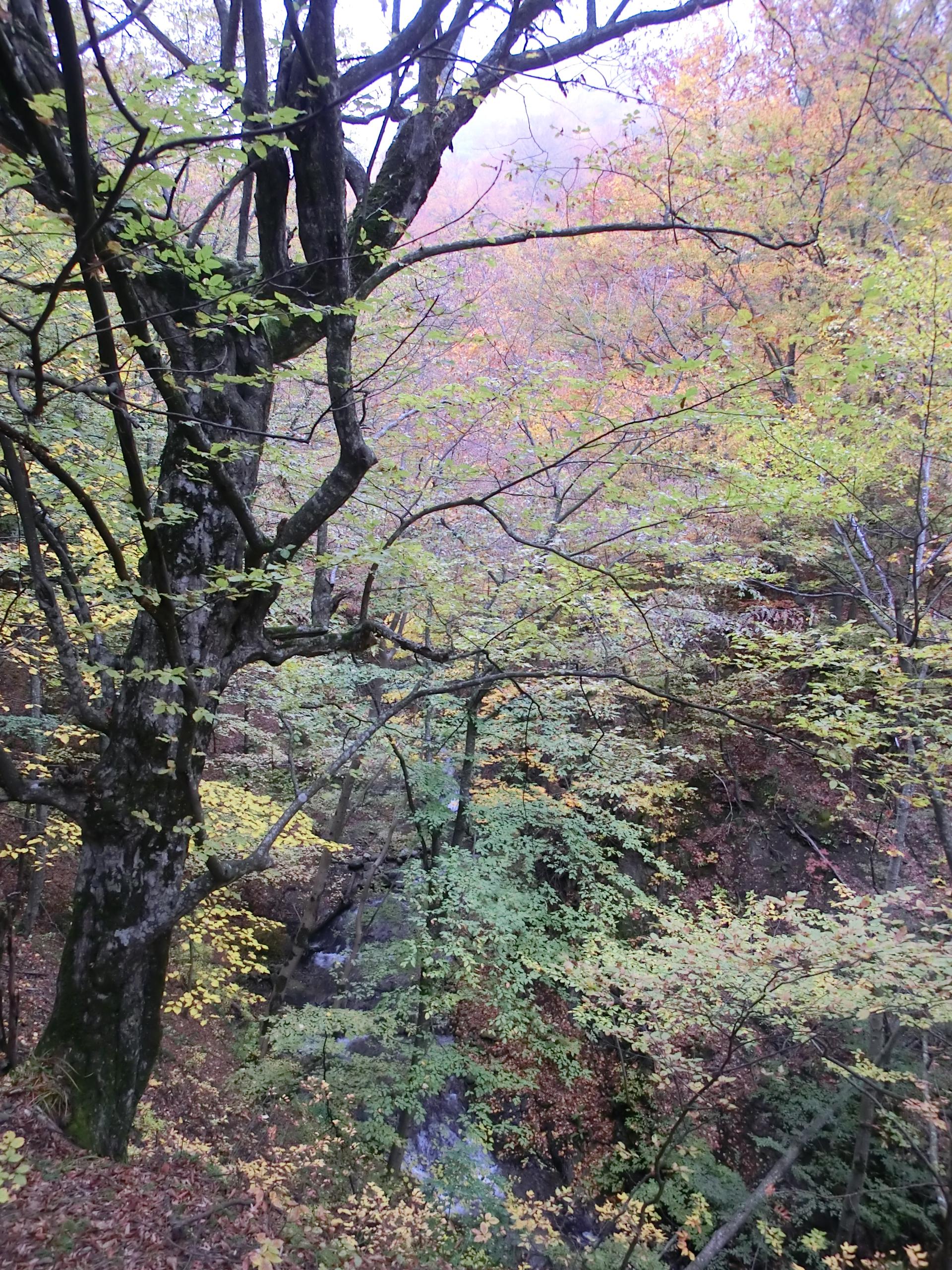 11 - 12.10.2013 - Râul Dumbrăvanu - Tură Muntele Coza