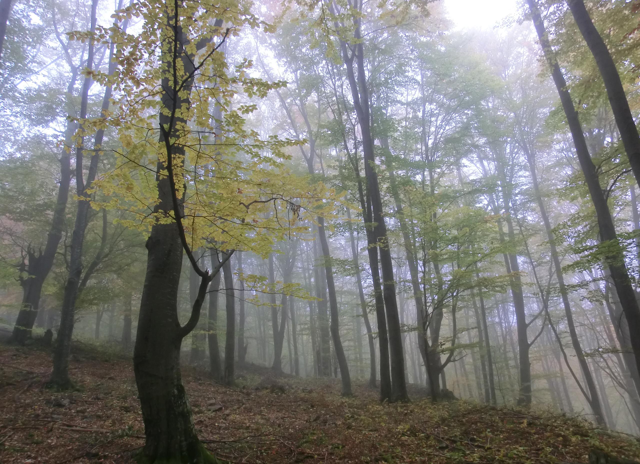 14 - 12.10.2013 - Tură Muntele Coza