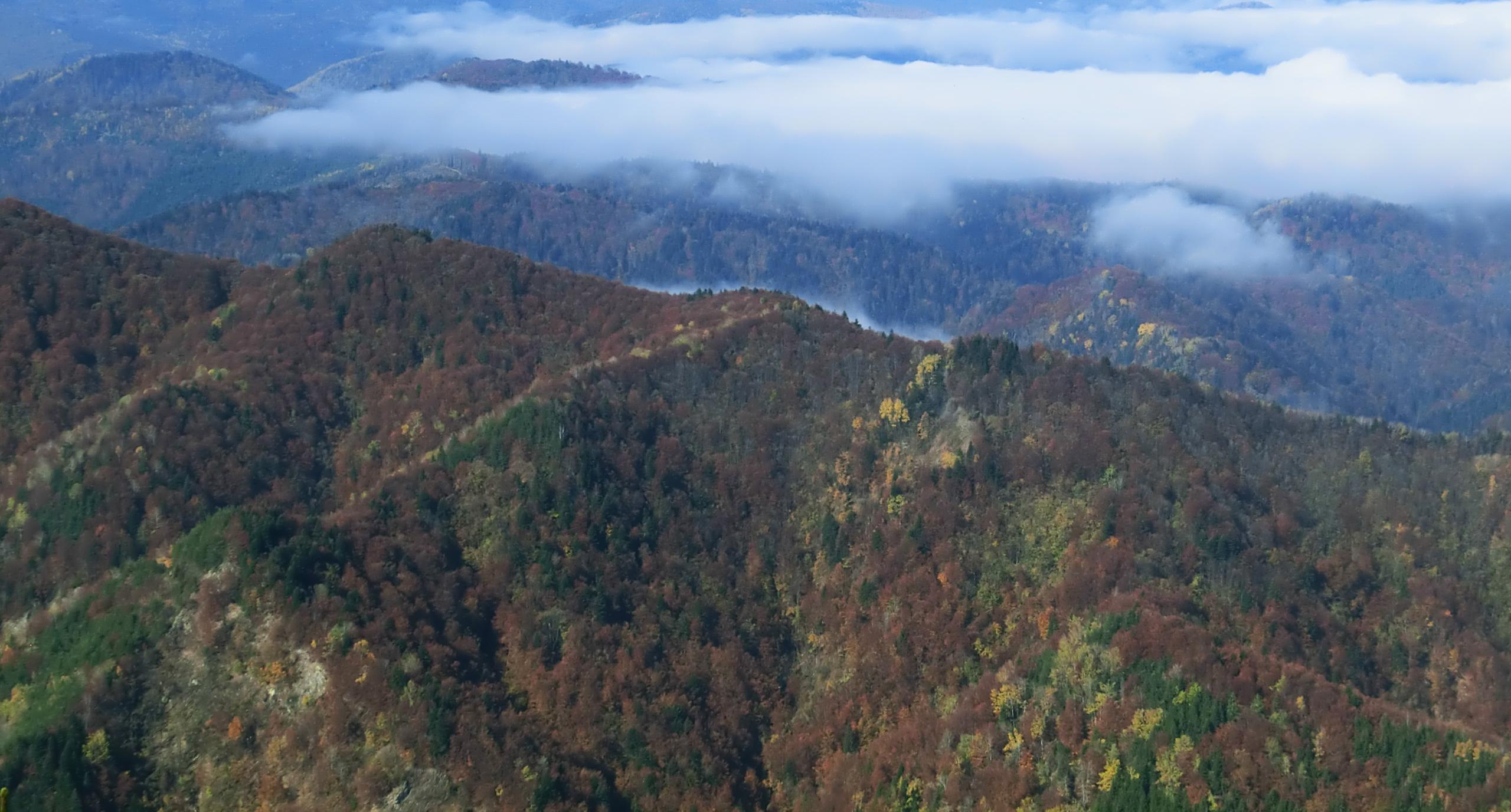 173 - 13.10.2013 - De pe culmea Gurguiata - Tură Muntele Coza