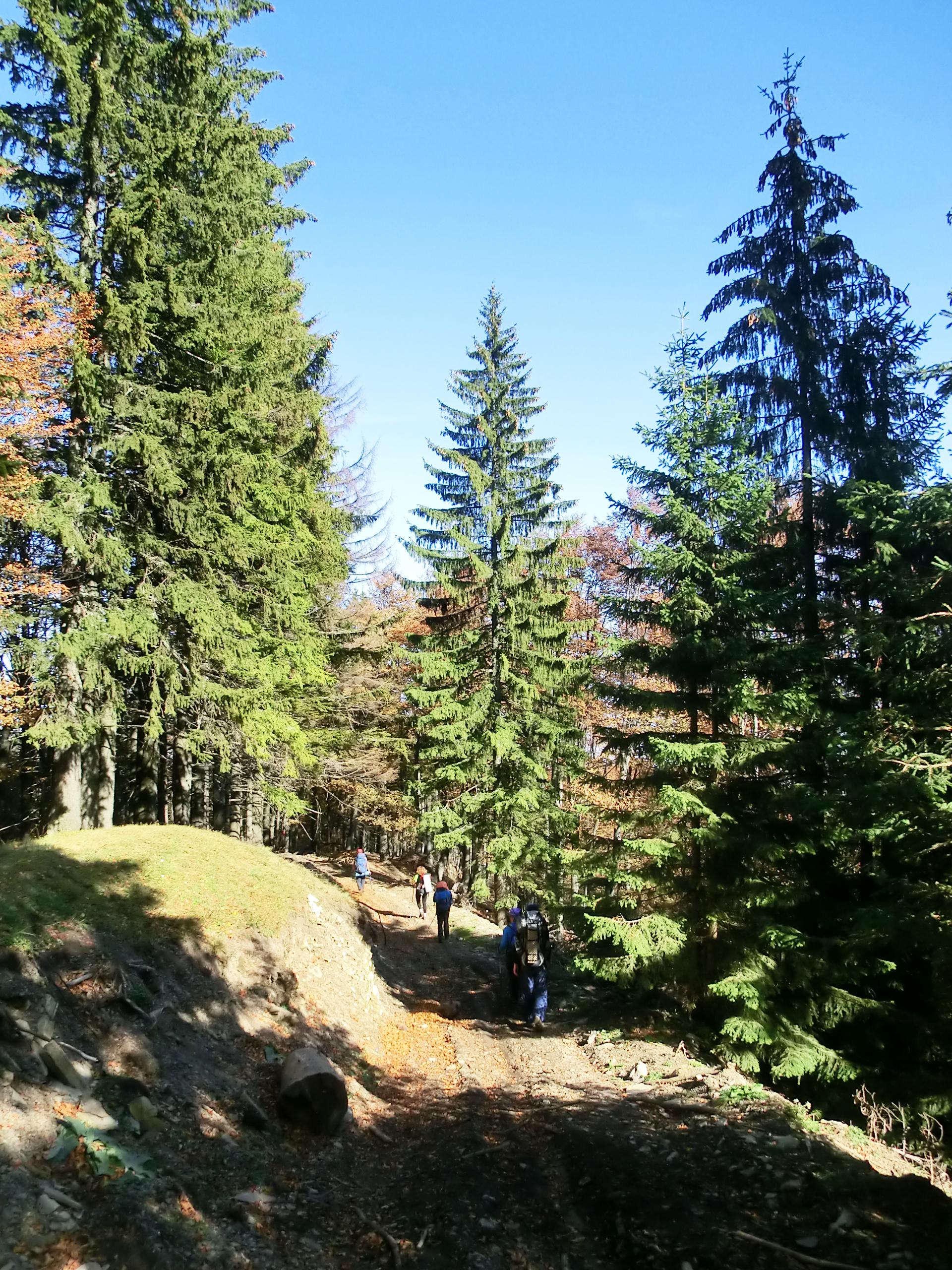 216 - 13.10.2013 - Pe drumul forestier - Tură Muntele Coza