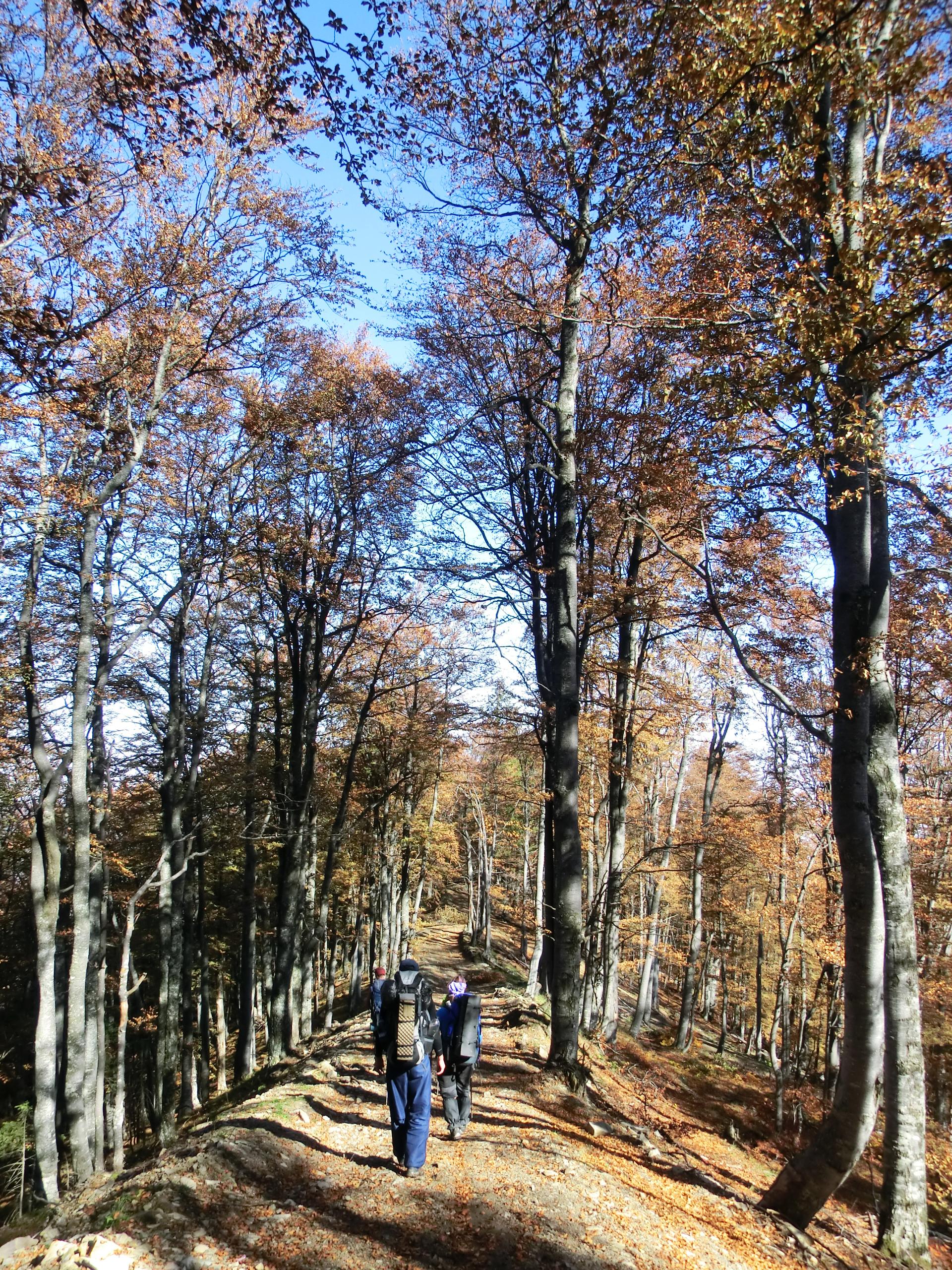 217 - 13.10.2013 - Pe drumul forestier - Tură Muntele Coza