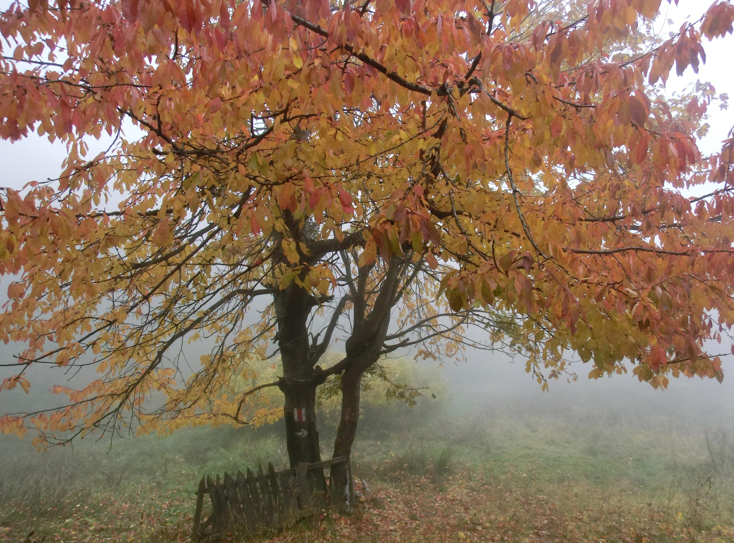 22 - 12.10.2013 - Tură Muntele Coza