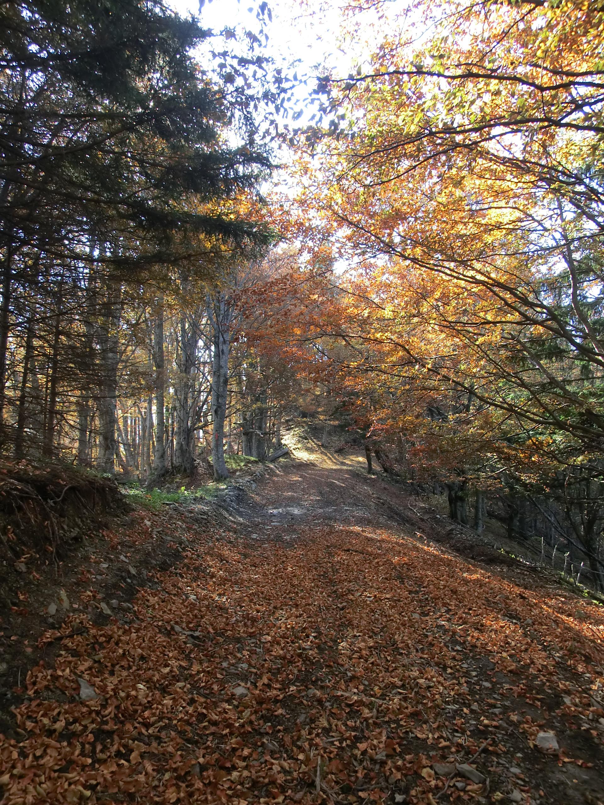 221 - 13.10.2013 - Pe drumul forestier - Tură Muntele Coza