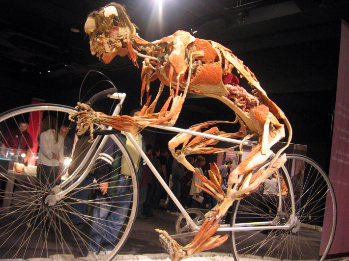 Gunther von Hagens; Body Worlds, Foto: thinkingchapblog.wordpress.com