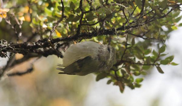 Pușcașul caută insecte pe o ramură de copac, Foto: diertjevandedag.classy.be