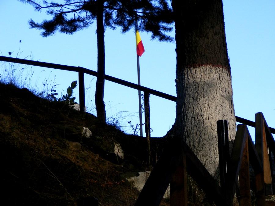 Steag printre copaci